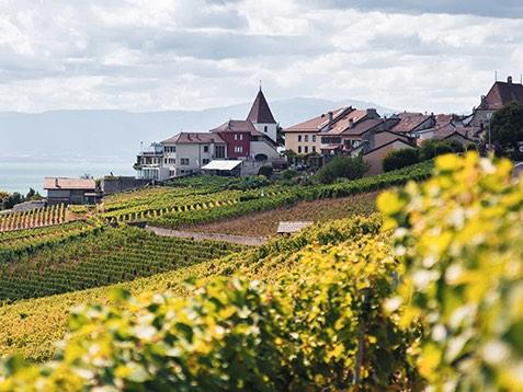 L'IFV a choisi le traitement des effluents vinicoles de la société Clairéo
