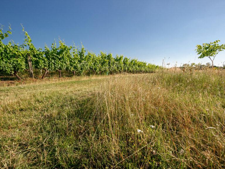 Domaine Maison Père et Fils, Vignobles Feray